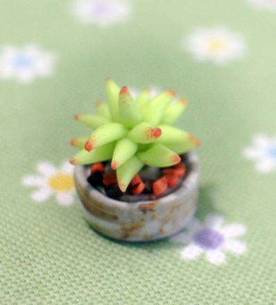 Clay Light Green Succulent Plant