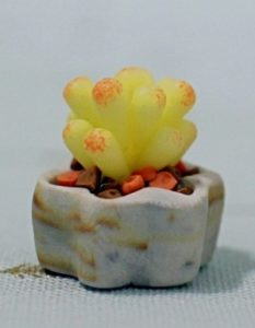 Clay Miniature Yellow Succulent Plants